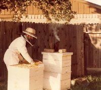 Working Bees When Conditions Are Right