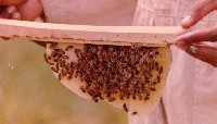 Beeswax foundation strip top bar hive